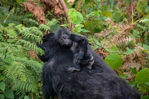 Uganda Marathon & Gorilla Experience with Nature Travel Active
