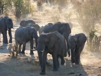 Vic Falls Marathon & Zimbabwe Safari with Nature Travel Active