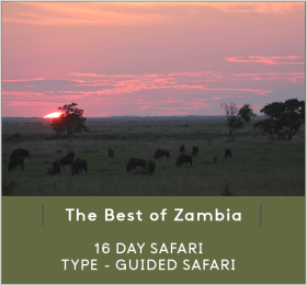 THE-BEST-OF-ZAMBIA