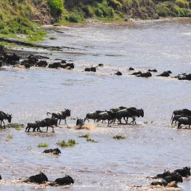 Maasai Mara (6)-2