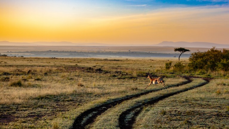 Serengeti, Tanzania with Nature Travel Africa