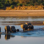 Elephants in South Luangwa NP