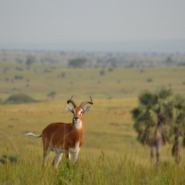 Uganda Wildlife Safari promo (8)