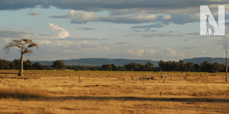 south-luangwa.png