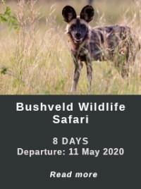 Bushveld-WIldlife