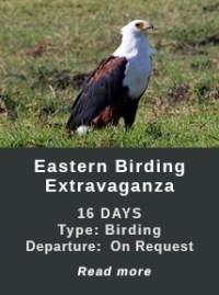 eASTERN-bIRDING-eXTRAVGANZA