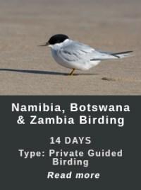 NBZ-Birding-Africa