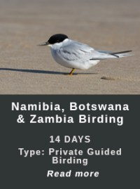 NBZ-Birding-Africa