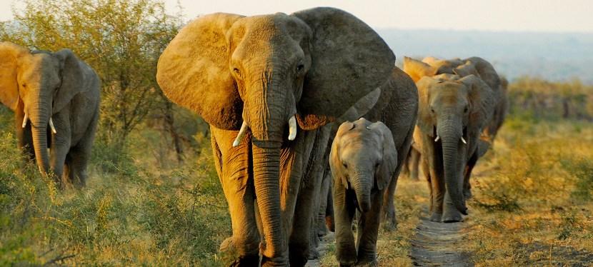 Our Safari Destinations
