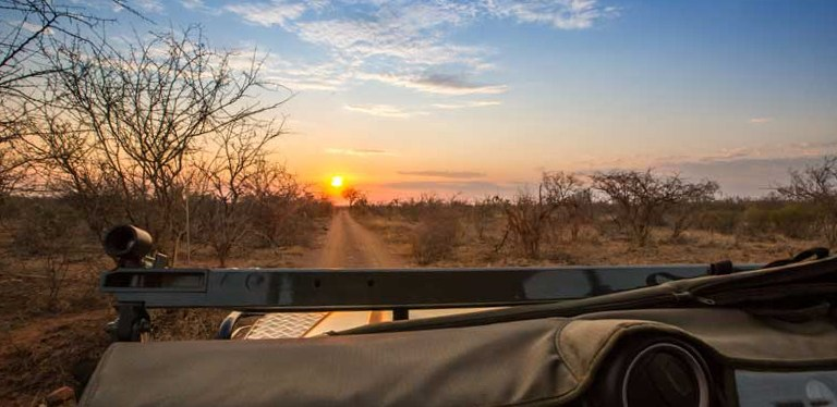 Bushveld Wildlife Safari