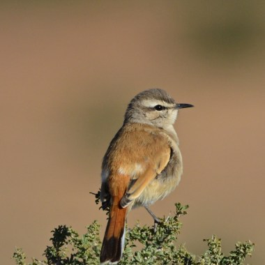 Windhoek Day Birding