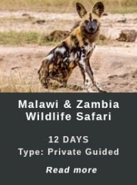 Wildlife safari in Malawi and Zambia