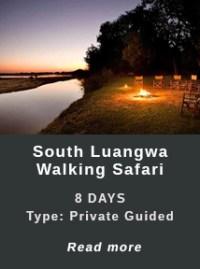 South-Luangwa-Walking-Safari