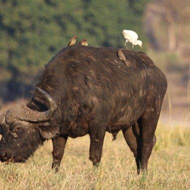 Luxury Botswana Safari