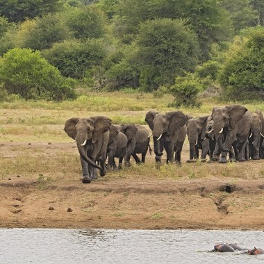 African-Elephants-in-Mana-Pools