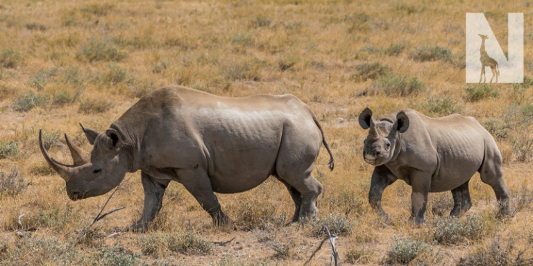 Save-the-Rhino-Walking-Safari