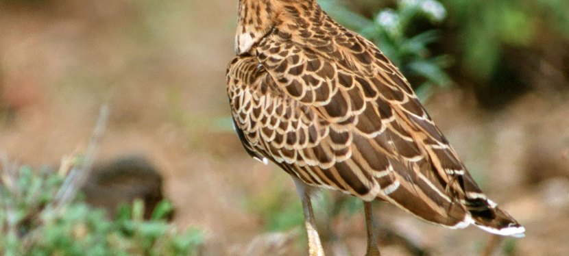 Highlights of Northern South Africa Birding