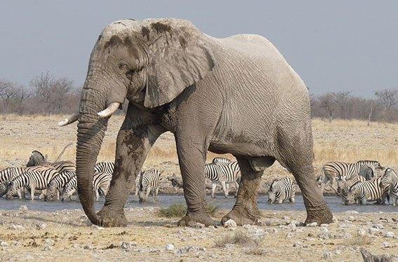 Extended Classic Namibia Safari