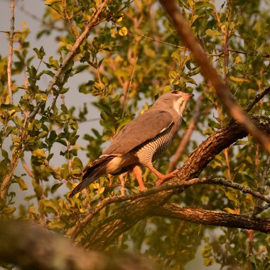 Malawi Birding