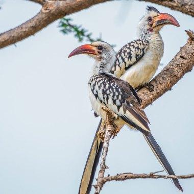 ethiopia birding tour