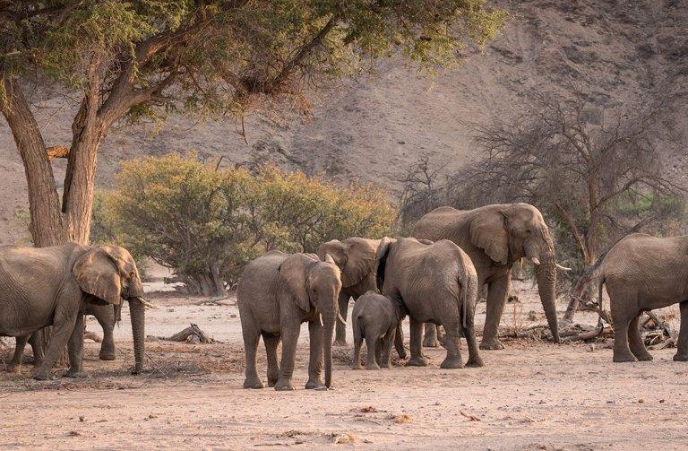 Damaraland---Elephants