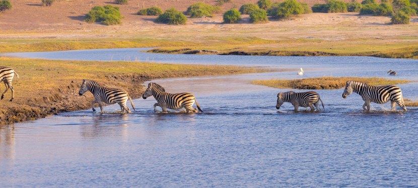 Namibia, Chobe & Vic Falls Safari