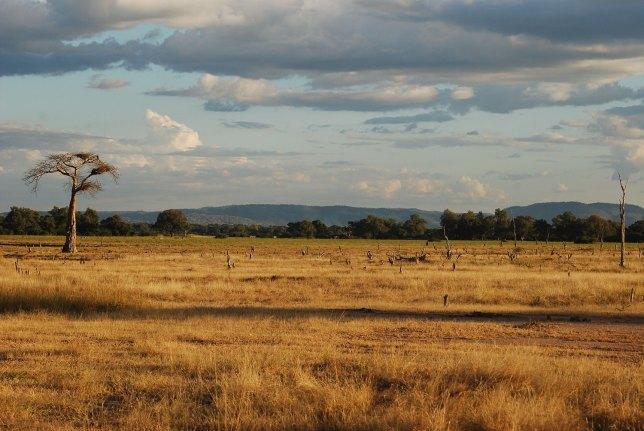South-Luangwa-(Zambia)