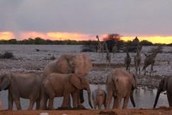 Etosha Elephants at Waterhole