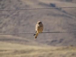 Armenia Birds 2