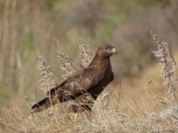Armenia Birds