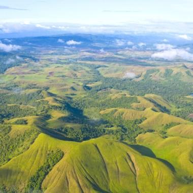 Birding in Papua New Guinea with Nature Travel Birding