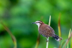 Birding in Central America with Nature Travel Birding