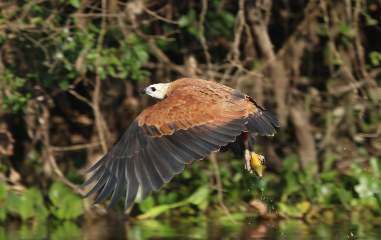 Birding with Nature Travel Birding