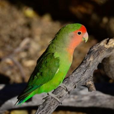 Special Namibia Birding Tour