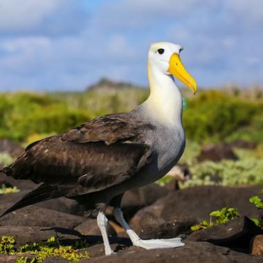Birding in Galapagos