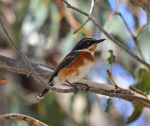 Birding in South Africa