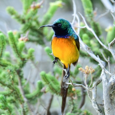 Birding in South Africa