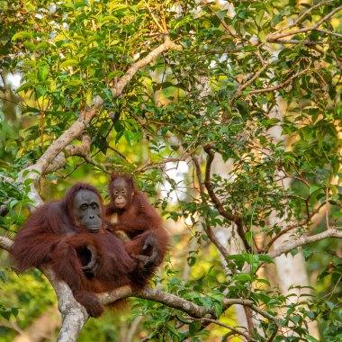 Birding in Borneo
