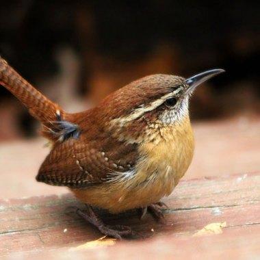 Spring Birding In Florida