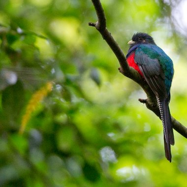 Birding in Malawi