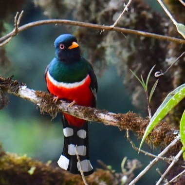birding-south-western-colombia