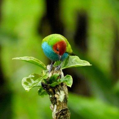 Colombia Birding
