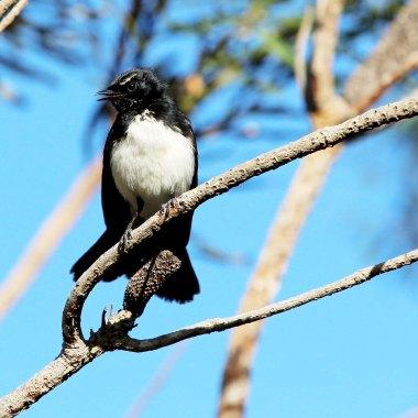 blou-mountains-birding