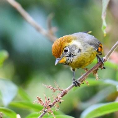 Birding in Asia
