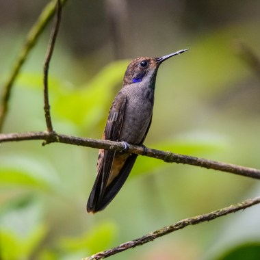 Birding in Central America
