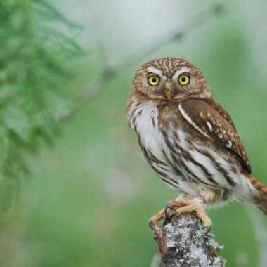Birding in North America