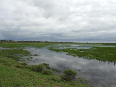 Kgomo-kgomo Floodplain