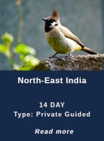 india-birding-tours