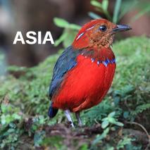 worldwide-birding-tours