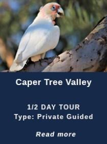 CAPER-TREE-VALLEY
